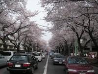 20070401sakura03