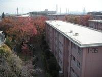 from_the_rooftop1