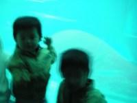 kasai_aquarium1
