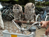 owl_brothers
