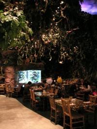 Rainforest02
